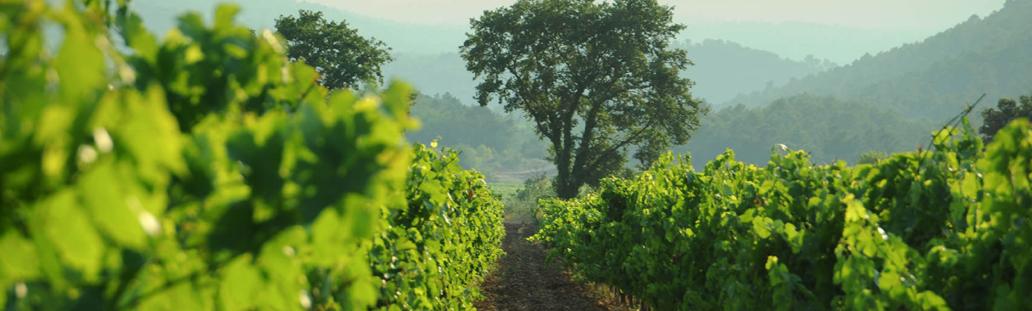 Château de l'Escarelle : un domaine viticole unique dans le Var